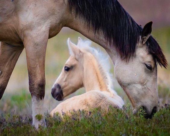 Výcvik koně
