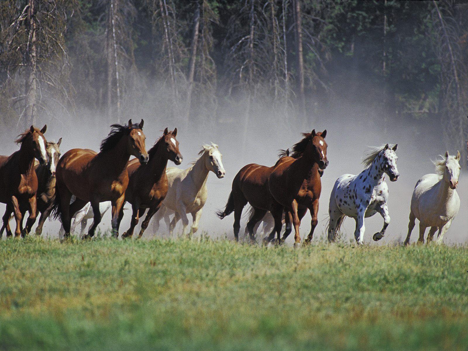 Jak to vidí kůň? část 2.