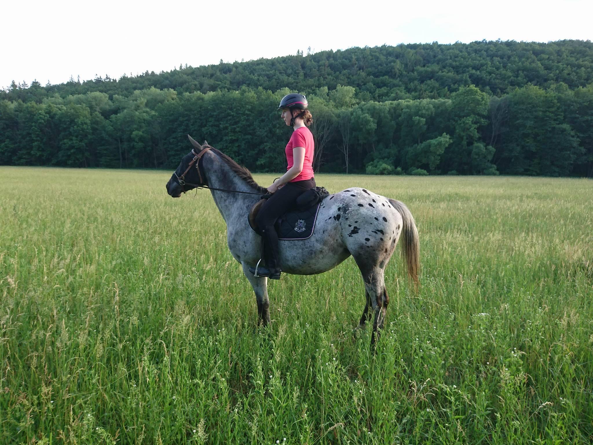 Mary a já aneb jak vypadá práce se slepým koněm?